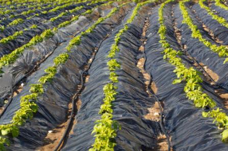 Instalación de geomembranas de polietileno en agricultura